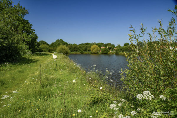 Belle balade autour de l'étang